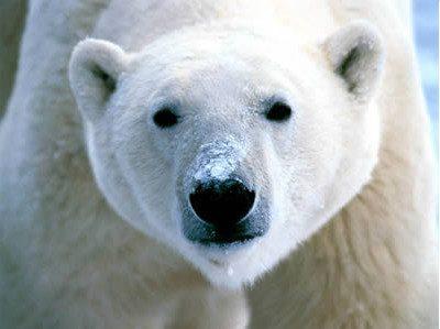 """Anticiclone termico russo-siberiano detto """"Orso"""""""
