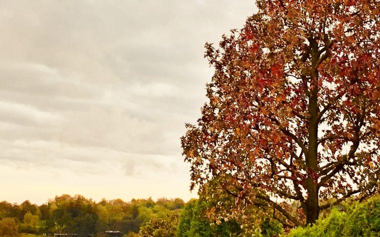 Dopo un assaggio di inverno, ecco di nuovo l'autunno!