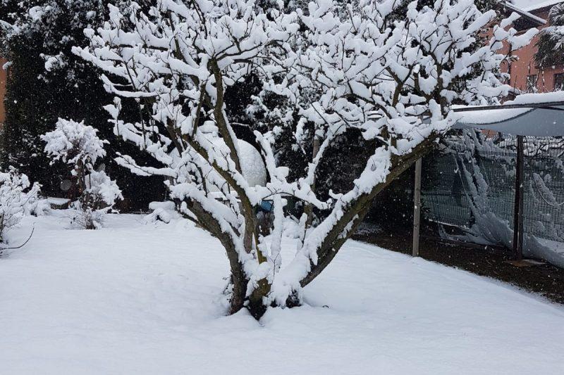 Report fotografico nevicata nel Varesotto e Comasco del 31-01 / 01-02-19.   I parte