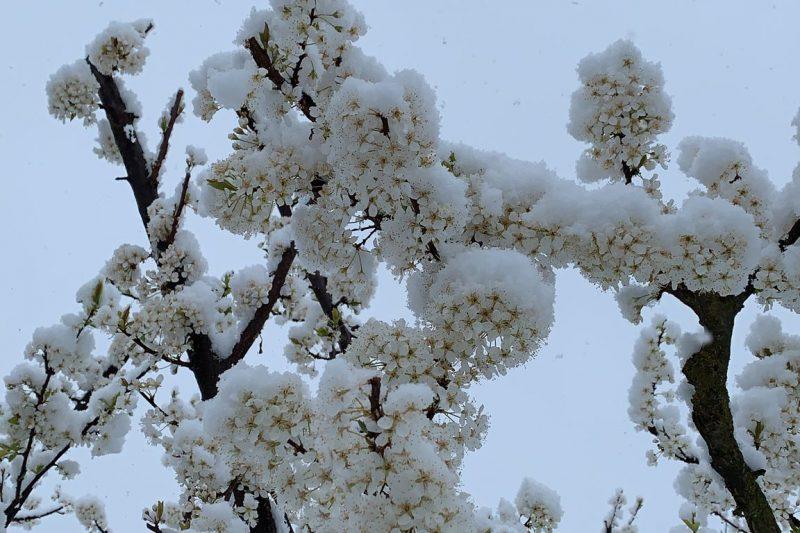 Report fotografico: nevicata del 19 marzo 2021 nel Varesotto